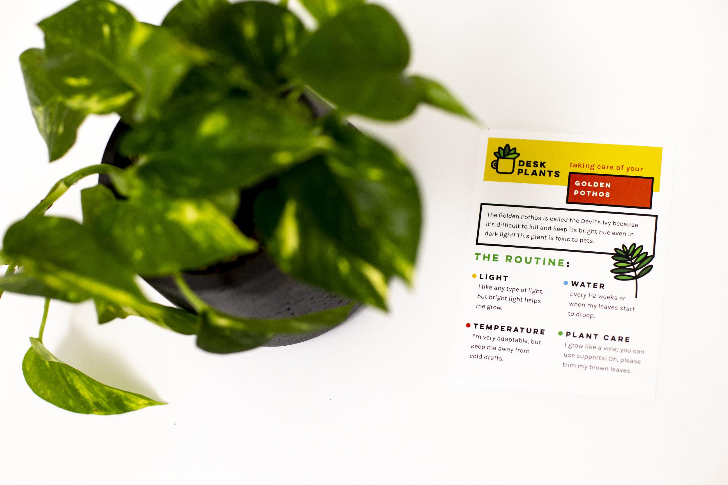 deskplants6544.jpg