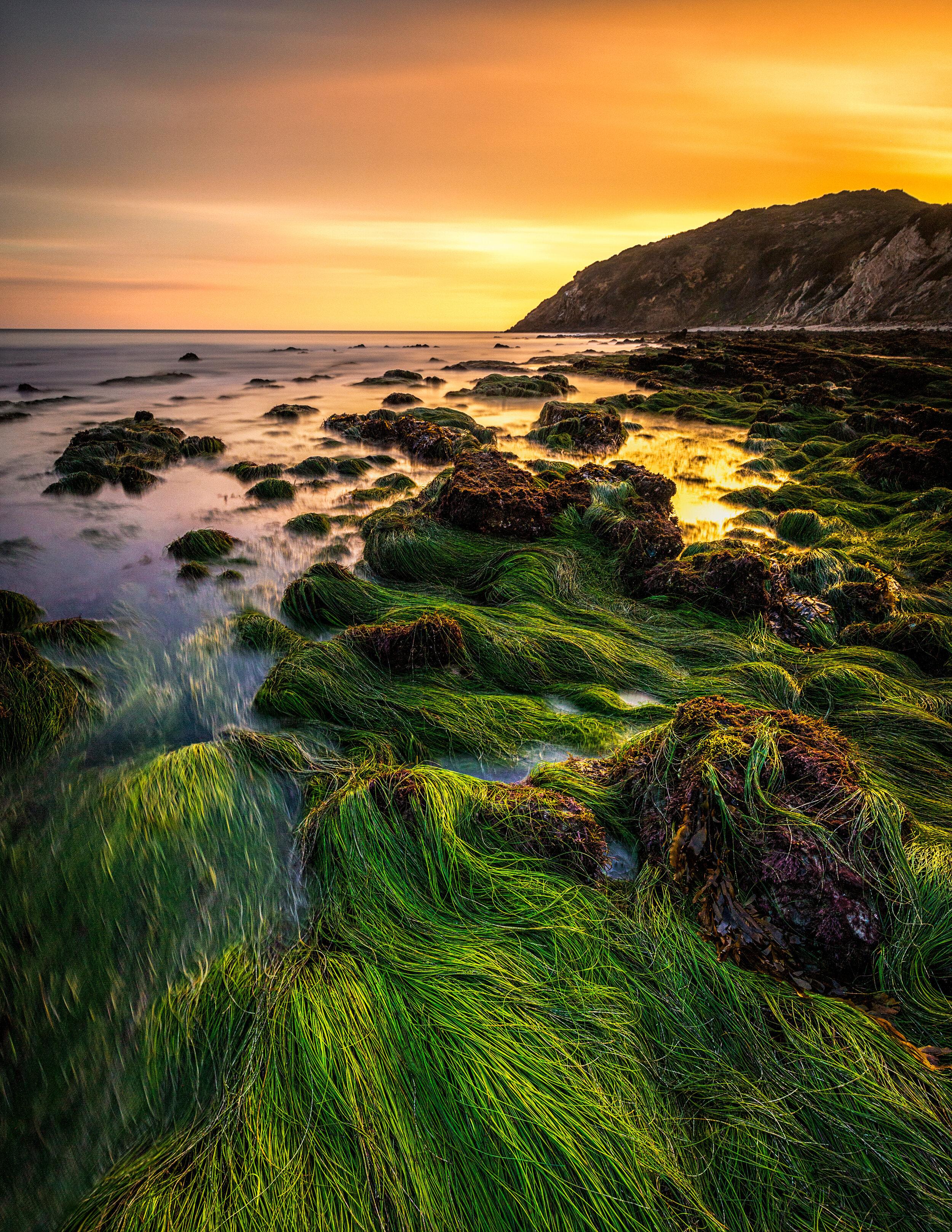 Seaweed Ledge.jpg