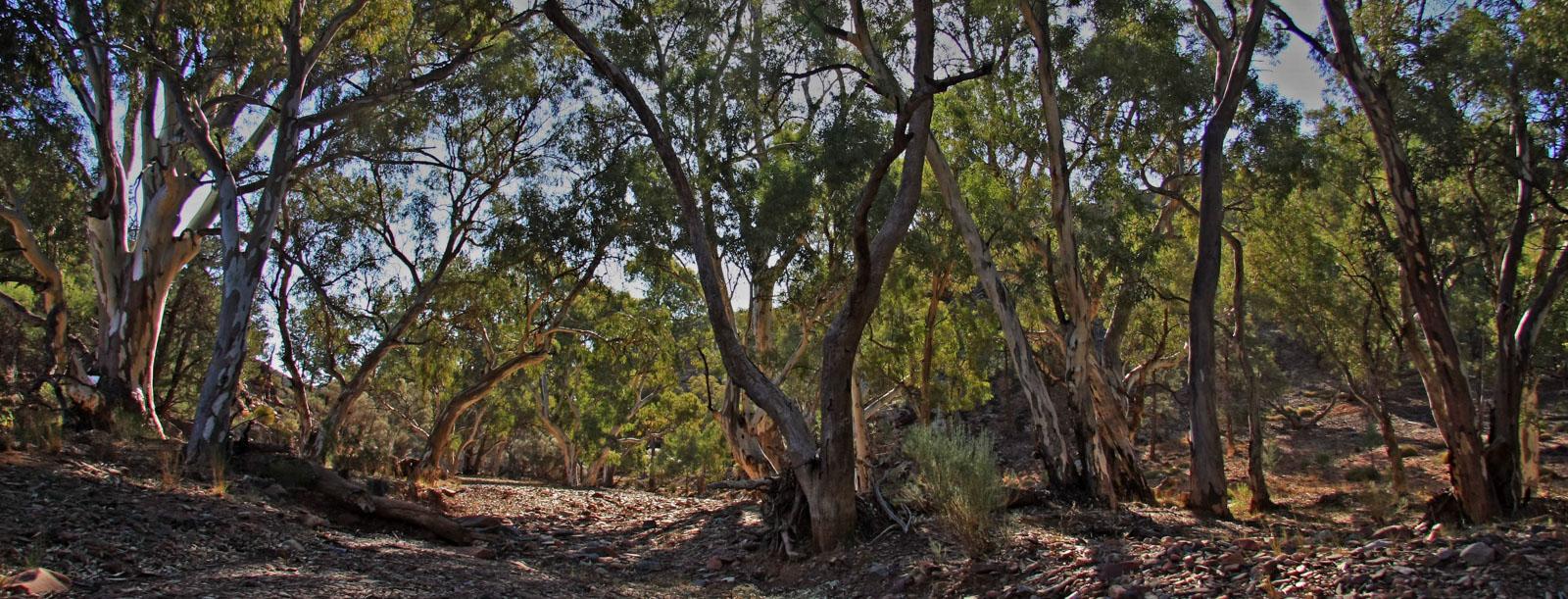 Flinders creek.jpg