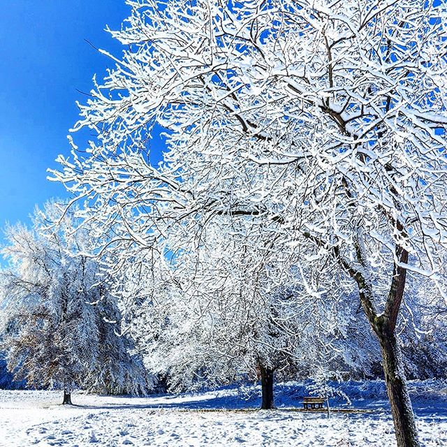 Snow damaged trees?  Give us a call!  631-225-2075 ~  What to do When Snow Damages Your Trees.... http://www.joescompletetreeservice.com/blog/ ~  #treeservice #treeremoval #treeservicelongisland #emergencytreeservice #emergencytreeremoval