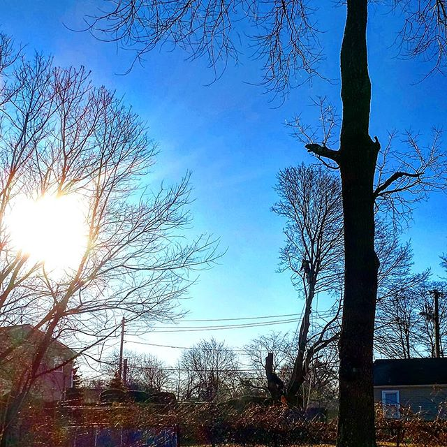 Tree Care After Pruning:  Proper approaches to pruning and wounded tree care can go a long way tokeep trees on your Long Island property safe and healthy.  http://www.joescompletetreeservice.com/blog/