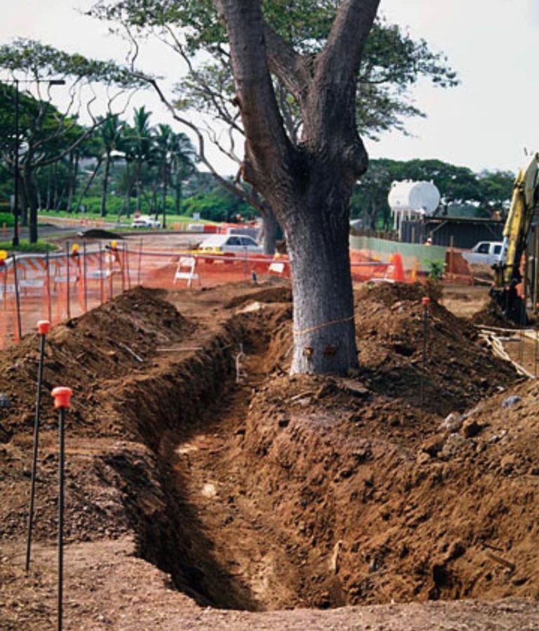 JoesTrees-BlogPic-20190706-Construction_And_Trees-2.jpg