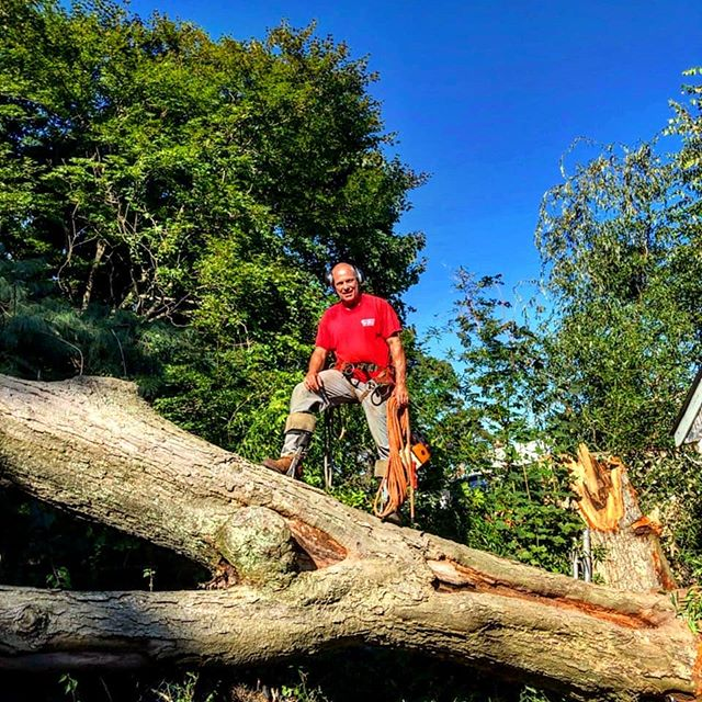 It's Hurricane Season!  Summer storms bring down some of the biggest trees on Long Island.  Joe's Complete Tree Service is here to help you clear away the damage and make your property safe and beautiful again!  Better yet.... Prune before the storm, and keep your trees standing tall through it all! ~  Contact us anytime to schedule a consultation and get an estimate:  https://www.joescompletetreeservice.com/contact ~  #joescompletetreeservice #longislandarborist #longislandhome #longisland #treeservice #treeservicelongisland #emergencytreeservice #treeremoval #joestreeservice #joetrees