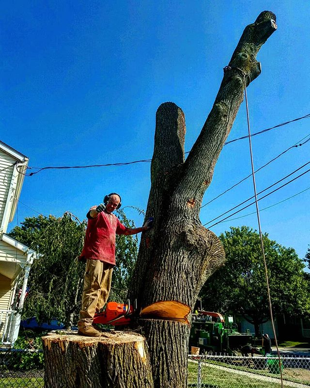 No Monster Too Mean or Too Tall!  Here's Joe removing an enormous tree that was damaged in the last storm.  The scariest thing in October could be an old tree falling on your property!  This fall, remember to trim, or remove the old and overgrown trees that will topple in storms.  Contact us by phone, or on the web to keep your property beautiful and safe!  631-225-2075  https://joescompletetreeservice.com/contact  #joescompletetreeservice #joestreeremoval #longislandarborist #longislandtrees #longislandhome #longisland #deerpark #treeremoval #treeservicelongisland #joetrees #joestreeservice #monster #halloween #fall #arborist #treeservice #treepruning #longislandtreeservice
