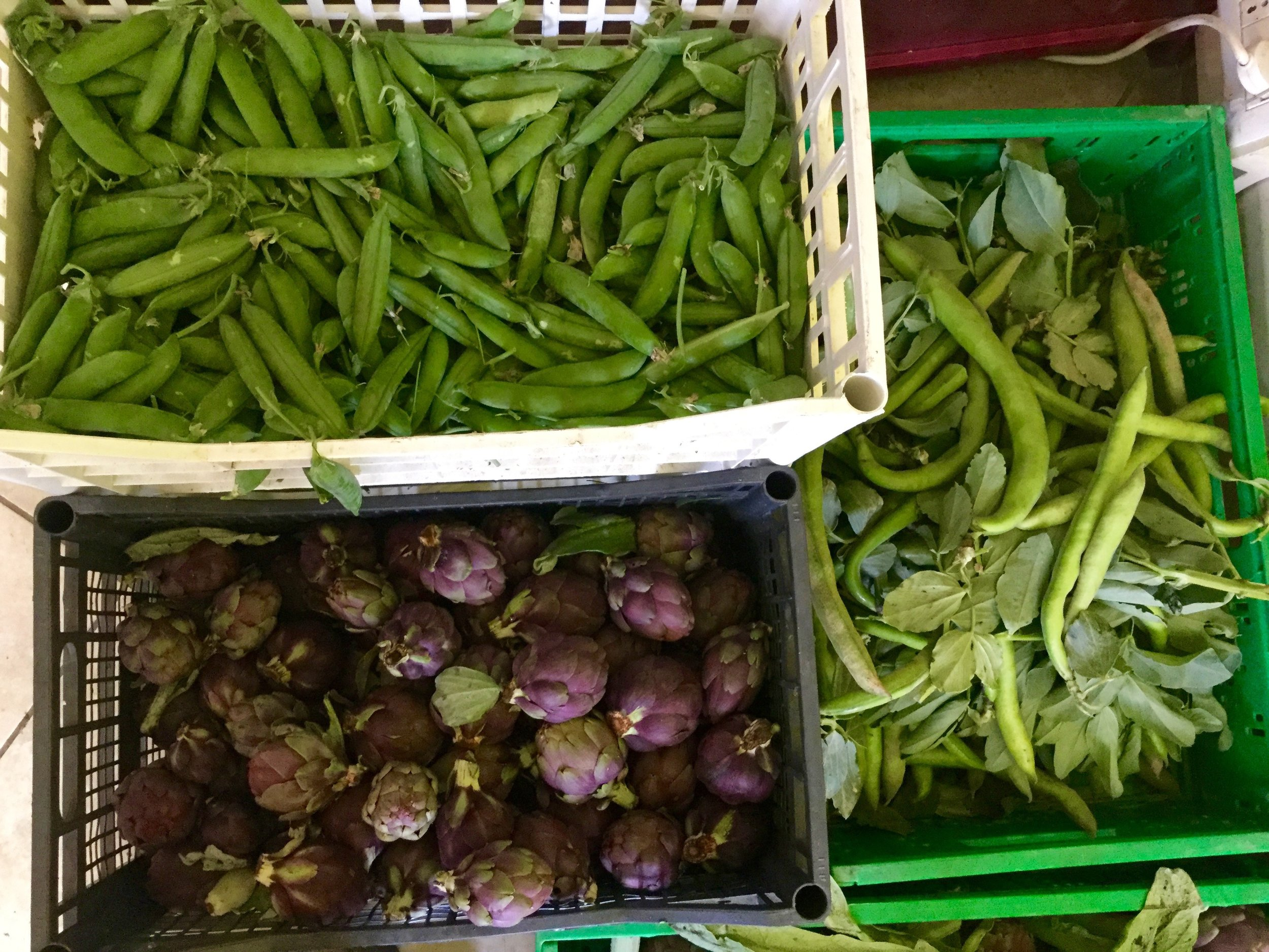 farmers-market_39135347684_o.jpg