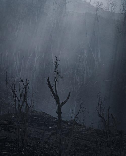 dead-trees-turrialba-volcano-500.jpg