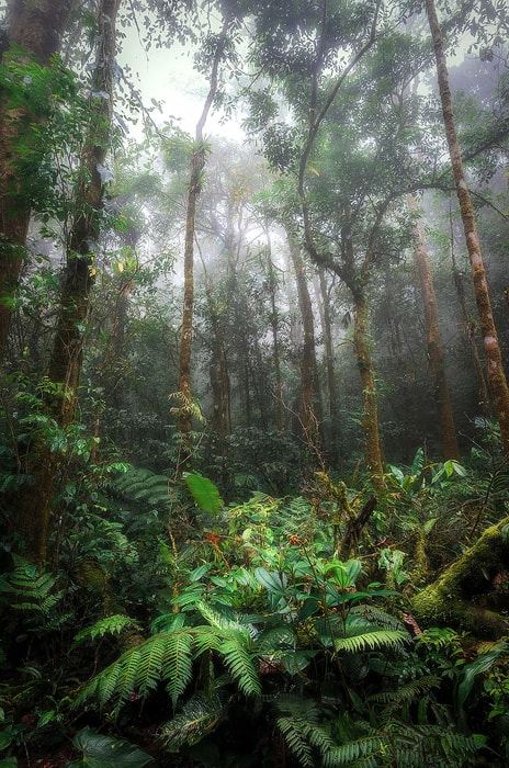 jungle-green-lush-2-large copy-700-min.jpg