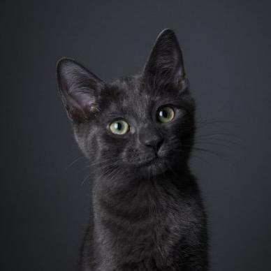 😱Ulykkesquiz på fredag den trettende!😱 - Spørsmål om alt fra ødelagte speil til dinosaurer (ultimat uflaks)... og her er en ledetråd også! Hvis du ser en svart katt, hva bør du gjøre for å unngå uflaks? 🤔😱