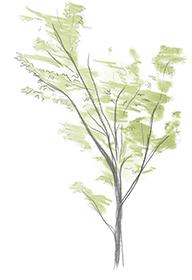 Tree_Sketch.jpg