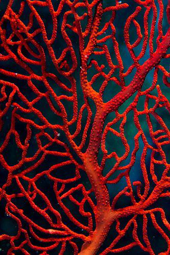 wanderlust_cabinet_landscape_coral.png