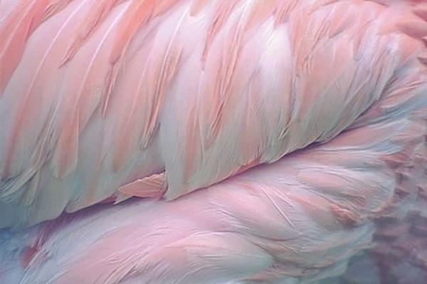 wanderlust_cabinet_landscape_feather.jpg