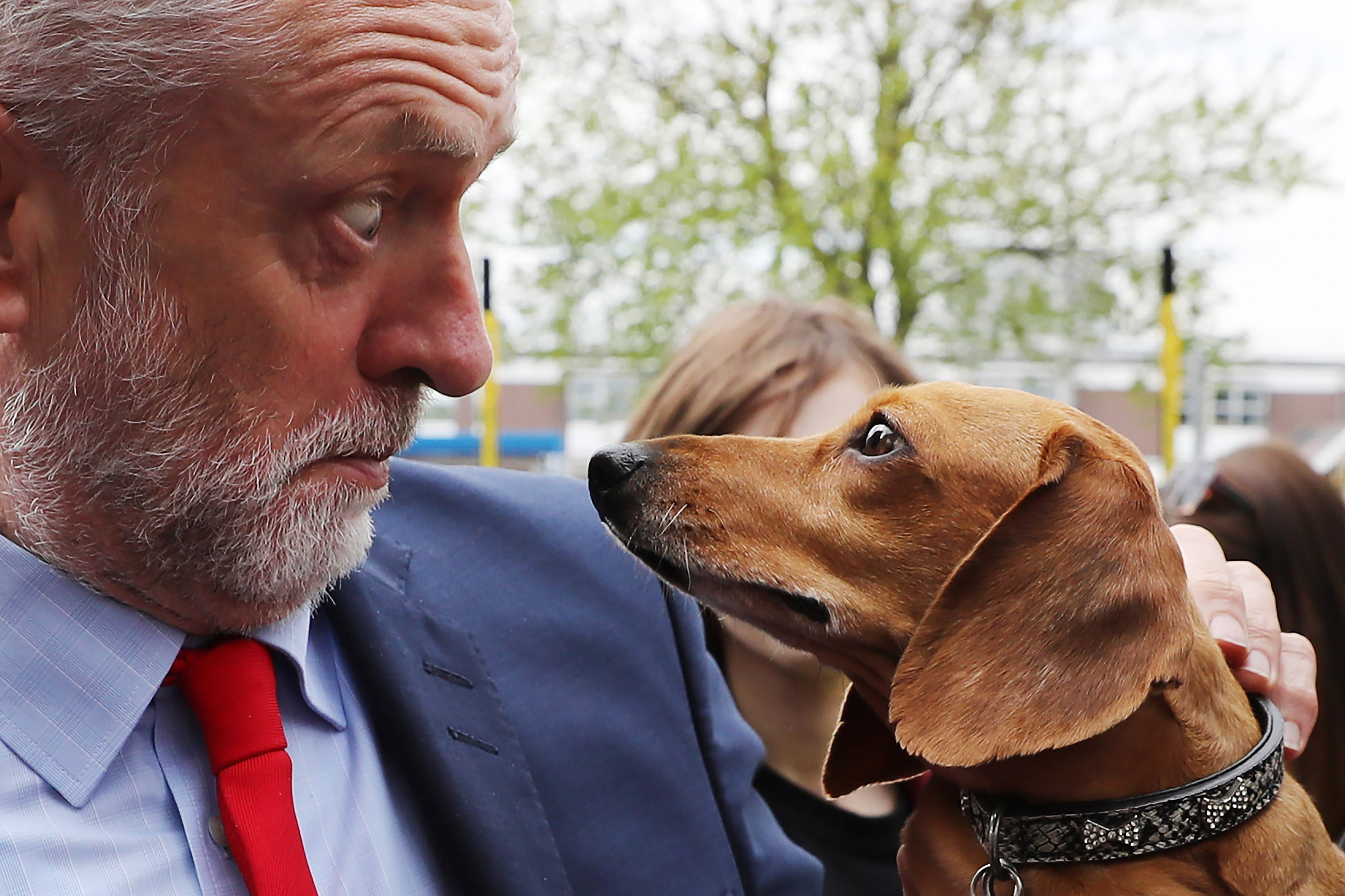 Labour Leader Jeremy Corbyn is startled by Cody the Dachshund during a campaign event outside the James Paget Hospital in Great Yarmouth.Photo by Dan Kitwood  13 May 2017