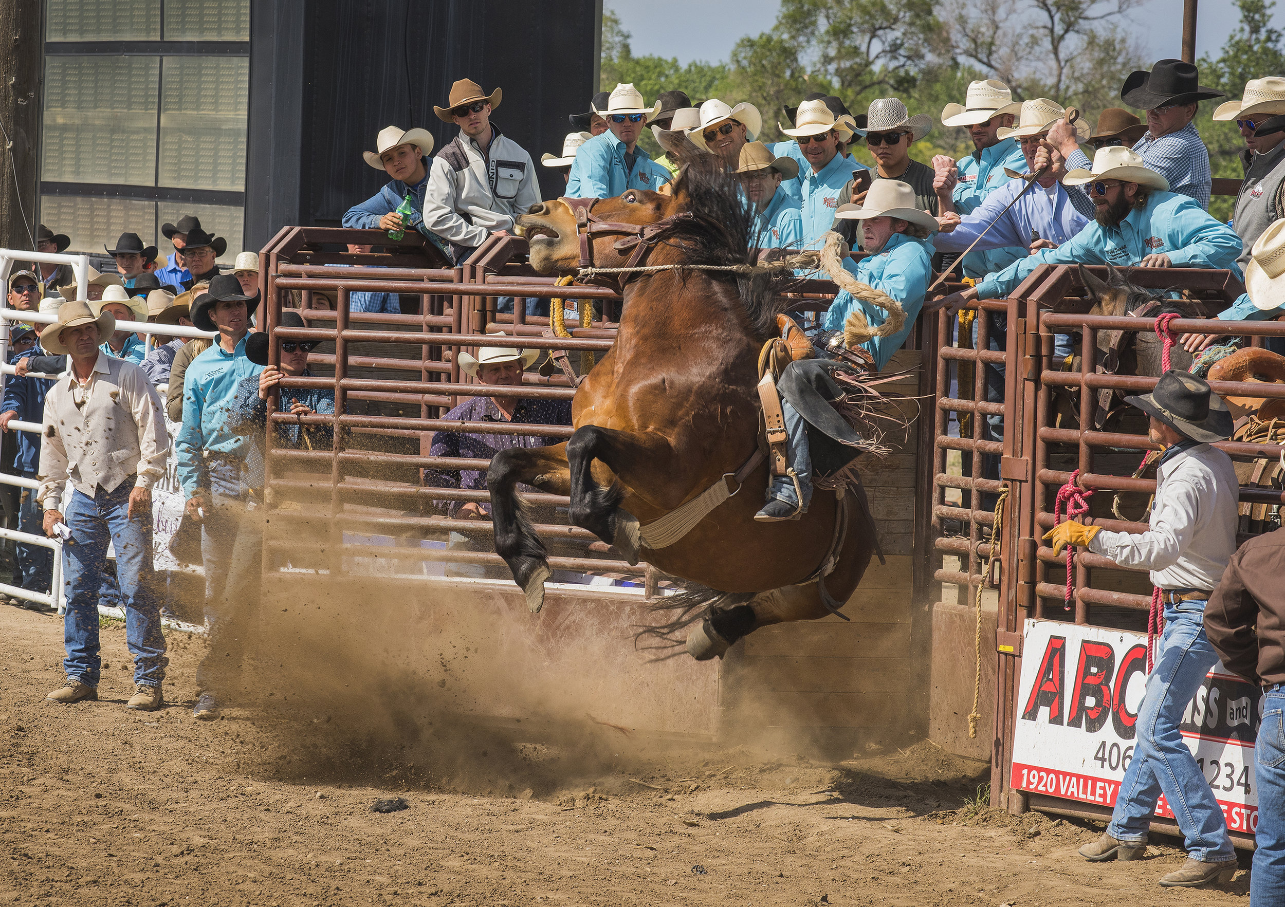 Cort Scheer guides his horse 983 Good Times out of the chute during the Long Go Bronco Riding event at the annual Bucking Horse Sale in Mile City, Montana.Photo by Greg Bos  21 May 2017