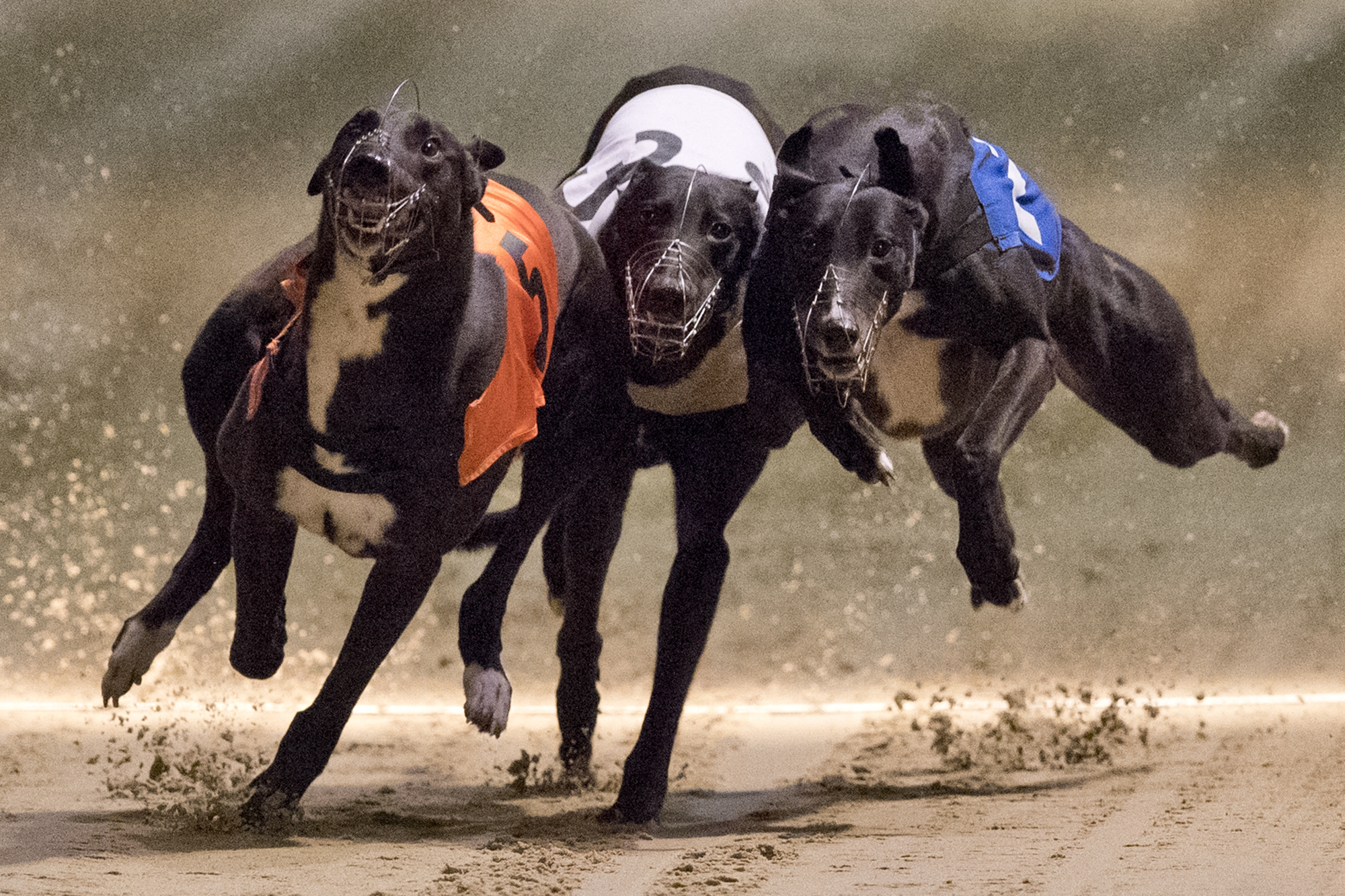 Greyhound racing at Wimbledon Stadium in south London one week before the final day of racing at the track which will be demolished to make way for a new stadium for AFC Wimbledon.Photo by Justin Tallis  18 March 2017