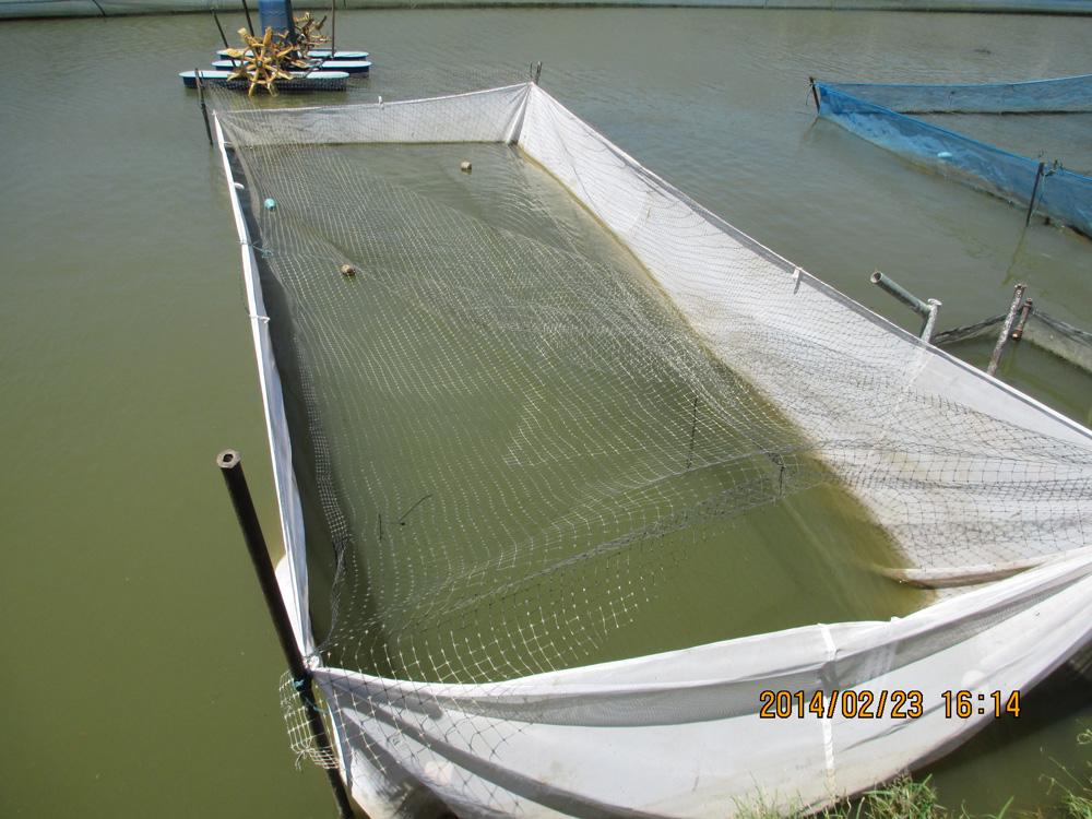 Shrimp Farming in Costa Rica