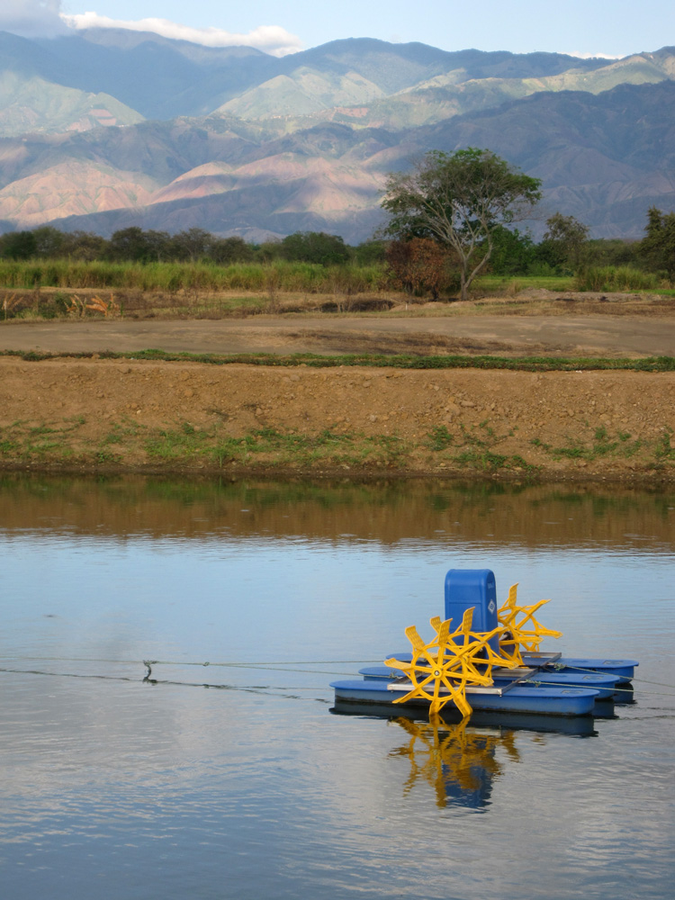 Tilapia Farm in Colombia Aquaculture