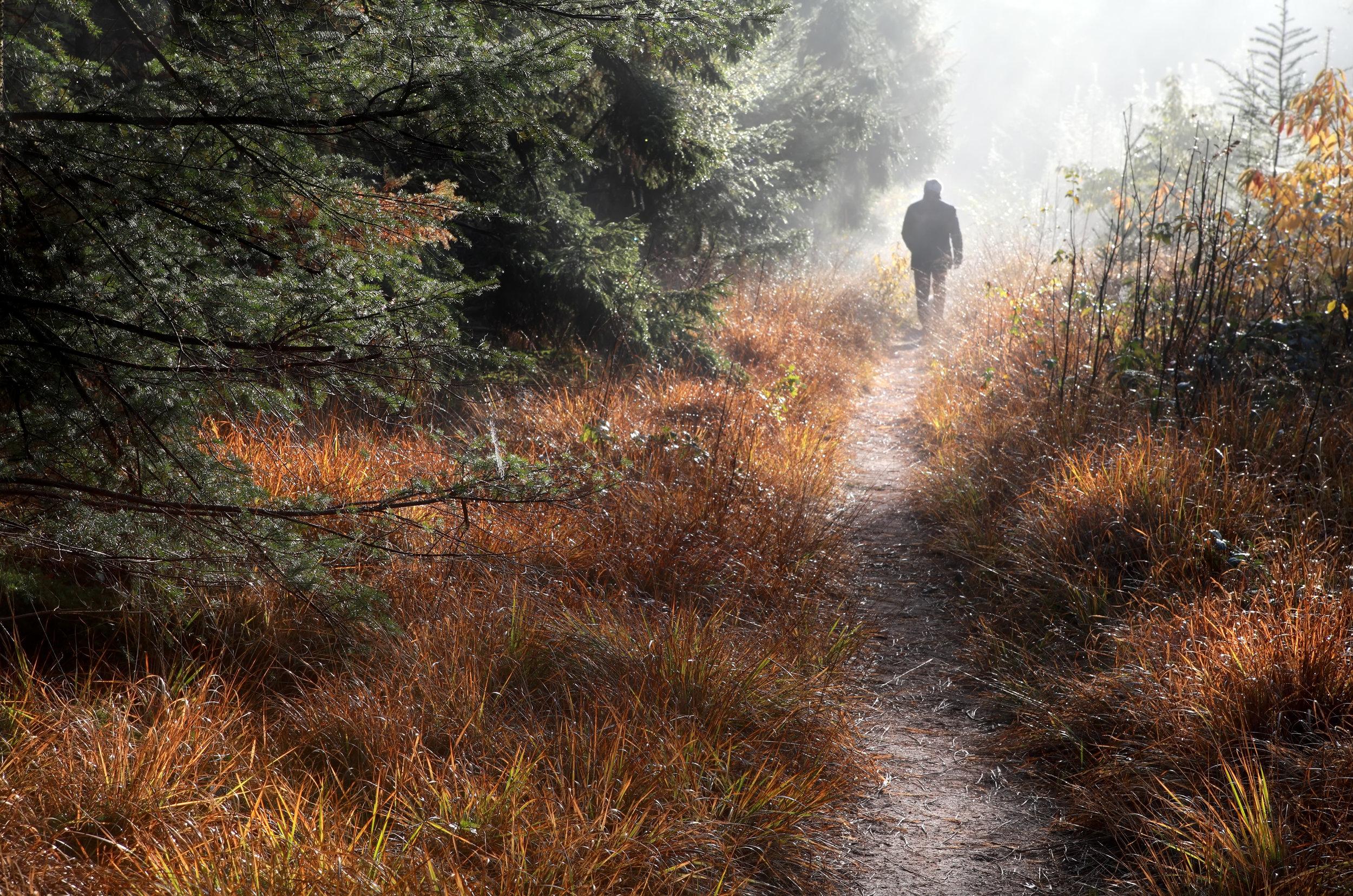 man-walks-on-forest-path-in-fog-P4RB8H2.jpg