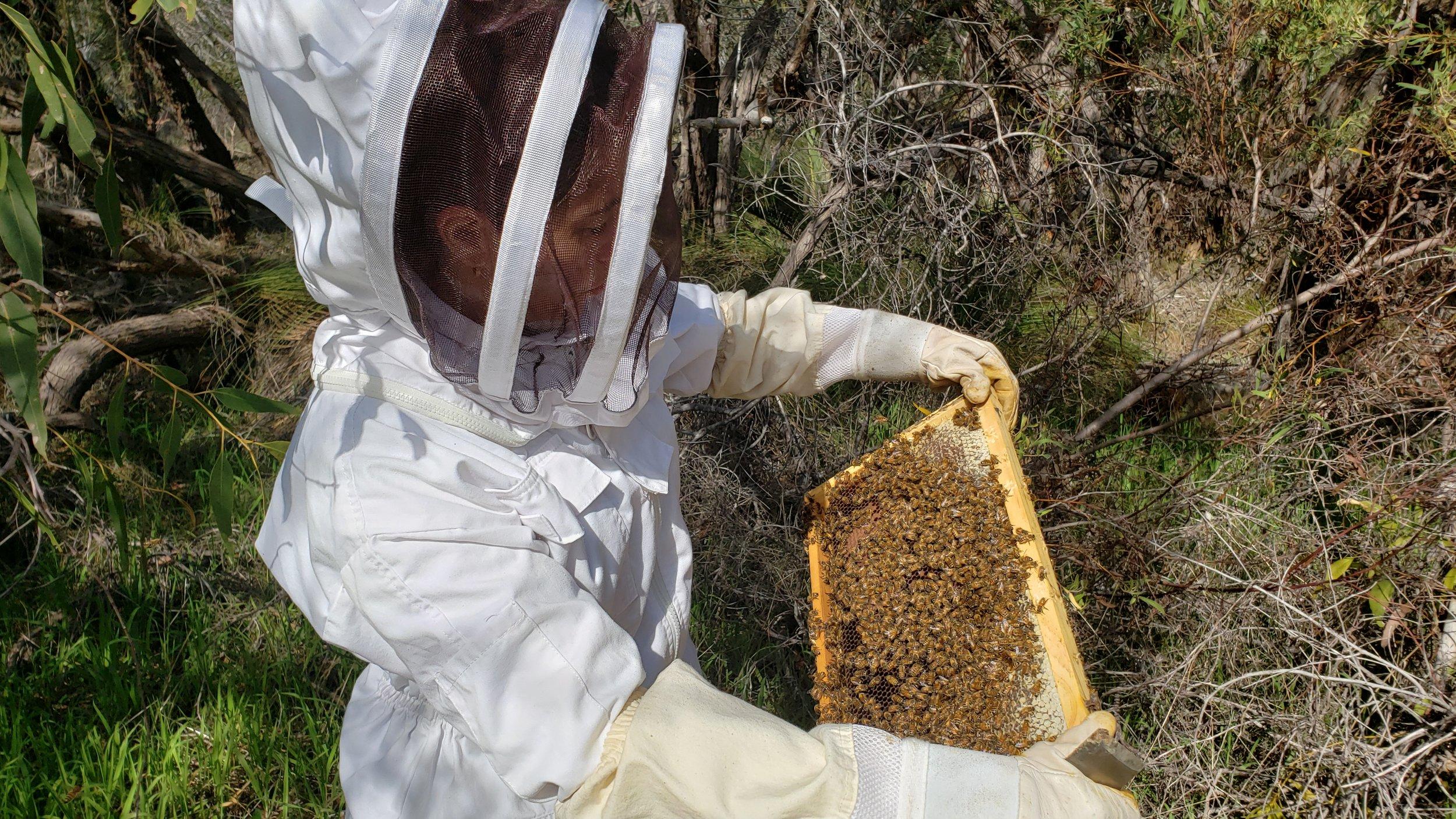 Beehive inspection Dani 3.jpg