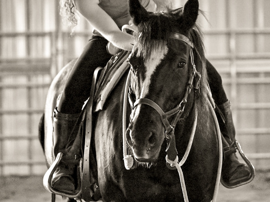 Horseback Riding Lessons | St. Paul