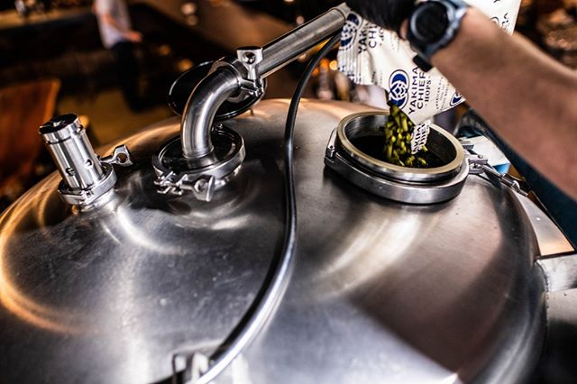 "Often we are asked about our IPAs and what makes them smell the way they do. A major factor is a process called, ""dry hopping."" Once the beer is mostly fermented, we add hops to the top of the fermenter and let them fall through the beer over about four days. This allows a slow extraction of delicate hop oils for enhanced hop aroma, but doesn't add bitterness to the beer. Every IPA, Double IPA, and Triple IPA we've ever made has been dry hopped and packaged as soon as possible to preserve the volatile aromas of the hop flower.⁣ ⁣ .⁣ .⁣ .⁣ ⁣ #qualitycontrol #beertasting #beerscience #brewmaster #brewing #craftbrewing #beerflight #beerstagram #localbrewery #virginiabrewery #vabeer #virginiacraftbeer #drinkgreatbeer #drinkcraft #kegging #fermentation #williamsburgva #virginiabeach #beerofinstagram #loveisbrewing #craftbeercommunity #craftbeerculture #supportsmallbreweries #beerweek #beerthings #craftbeerstagram #drinklocalbeer #wishyouwerebeer #drinkingoutsidethebox"