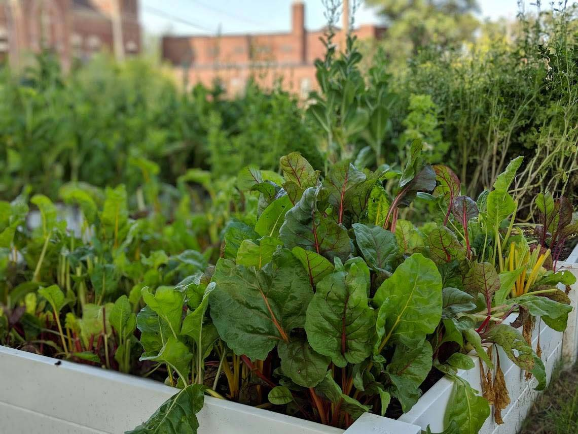 Urban garden at Sojourner Truth House
