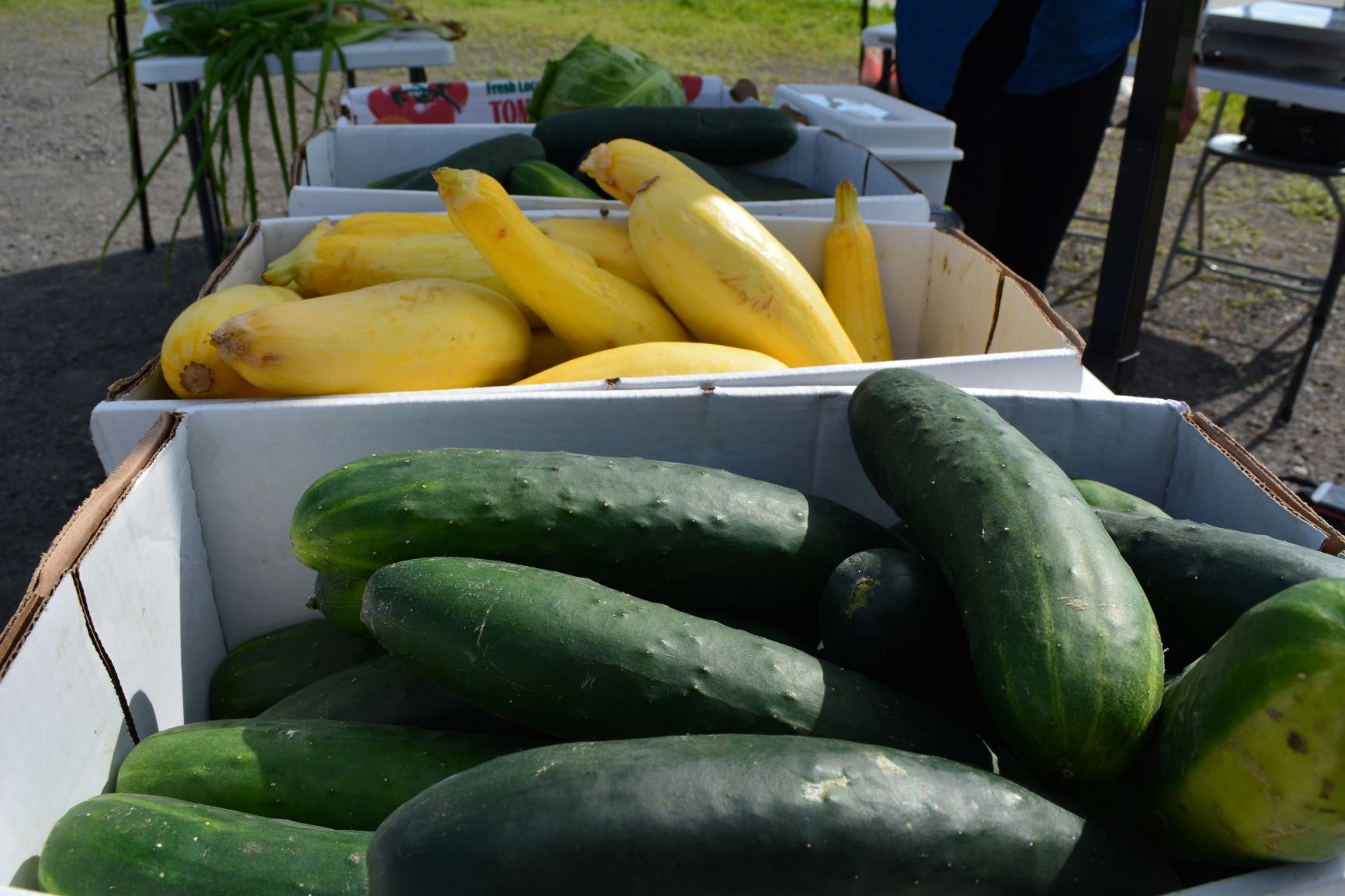 cucumbers-squash.JPG