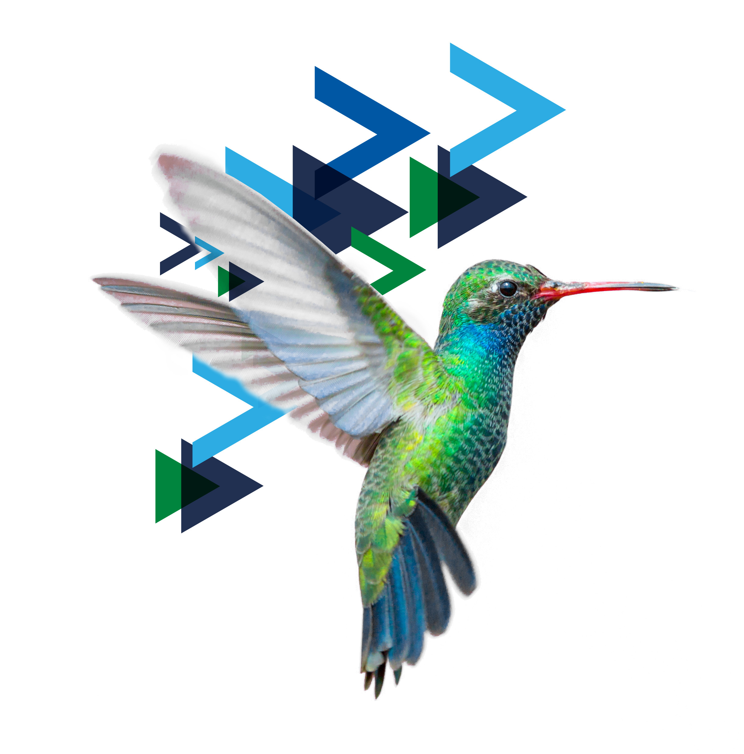 isolated jewel-toned hummingbird with Lever for Change brand icons lifting up the bird.