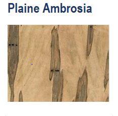 SI Bois Plaine Ambrosia.JPG