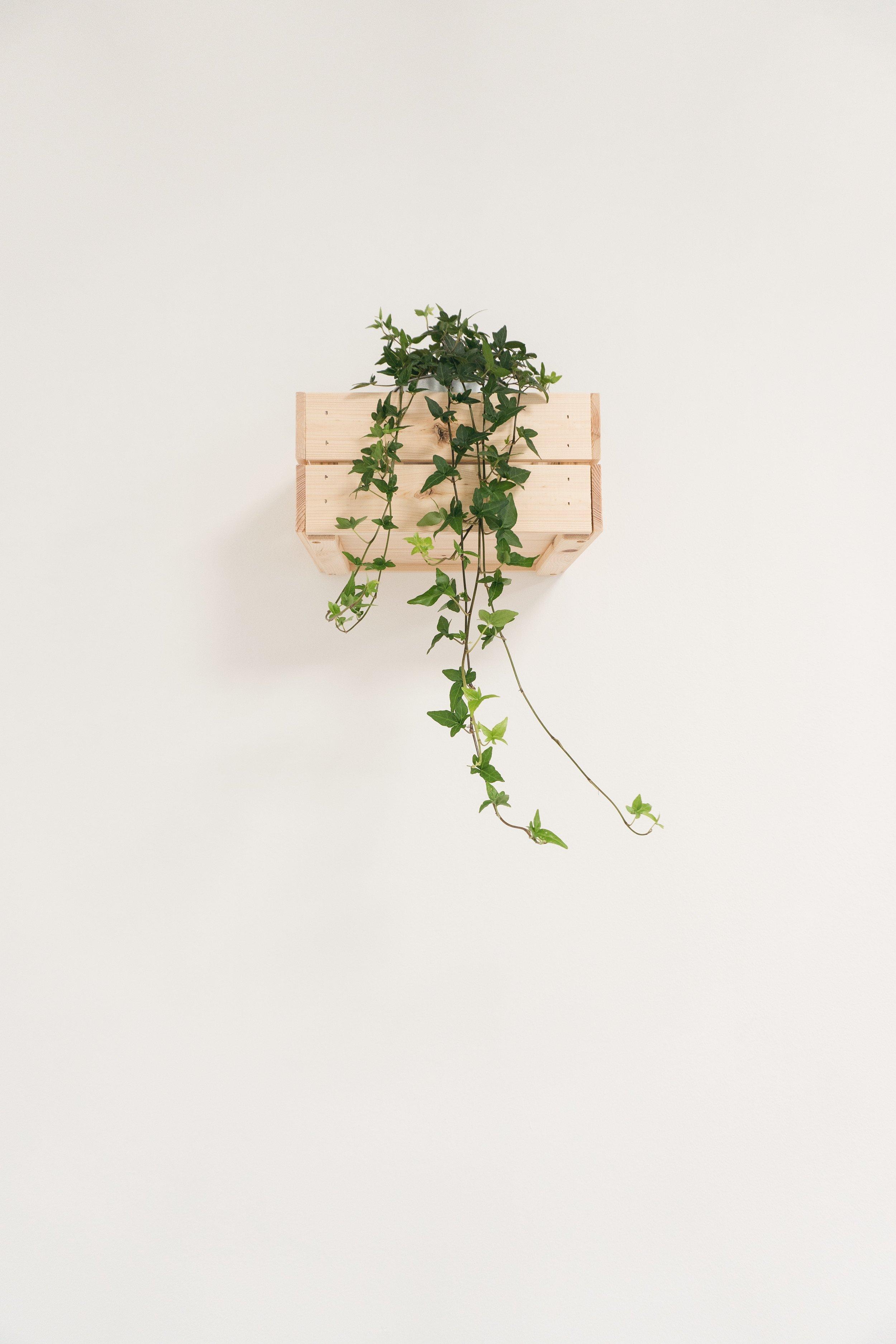 white wall with plant