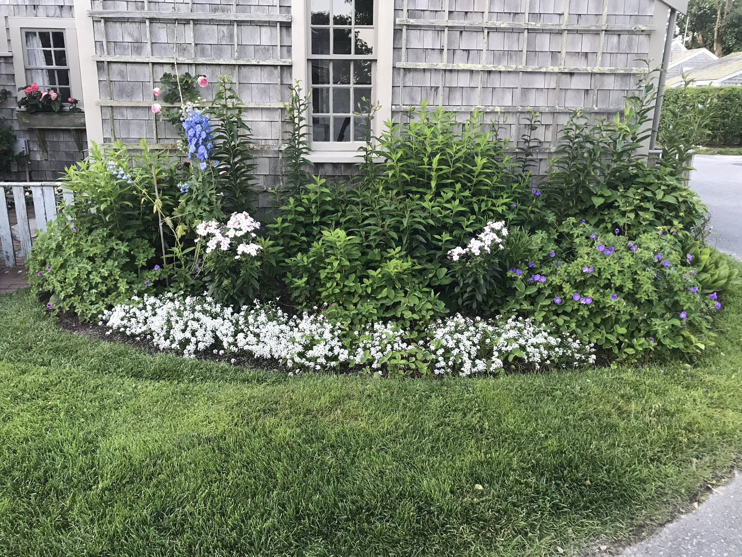 Historic Sconset Home. Early July 2018. As of the Tour date, this small garden has erupted in color and filled in completely. ©betsygibsondesign