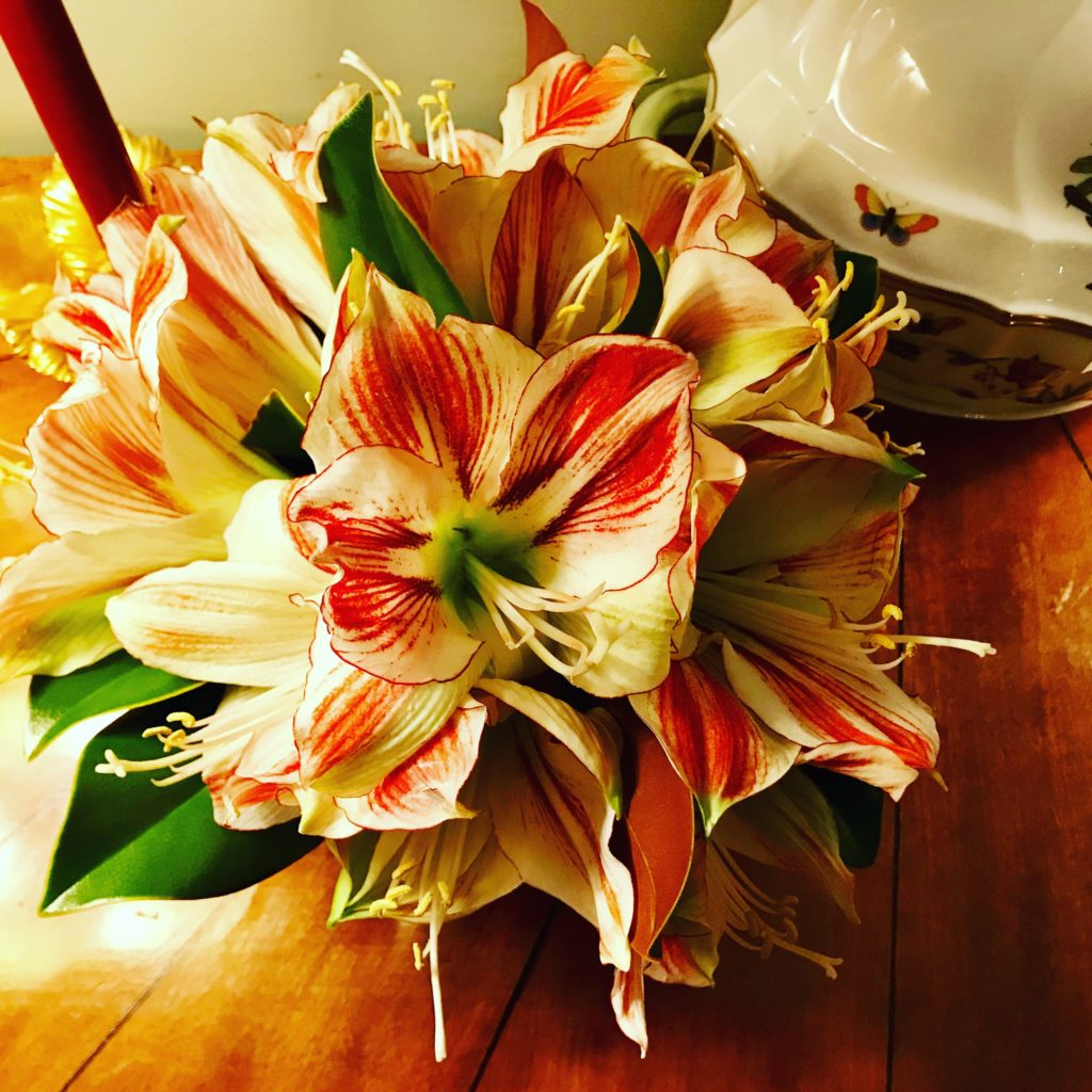 Amaryllis and Magnolia. ©betsygibsondesign