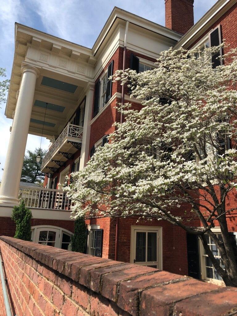 Dogwood at the Miller Center, Charlottesville VA. Photo: Merritt Gibson, April 24, 2019.