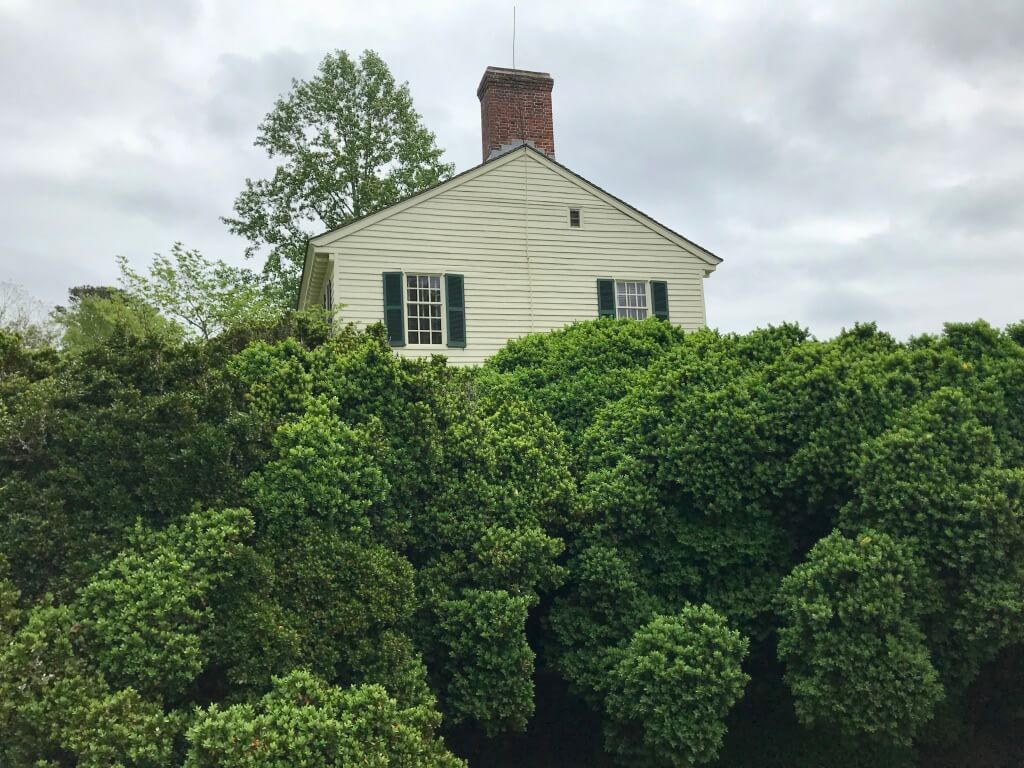 Side view of Grissell Hay House. LOOK at that Boxwood! Old growth, maybe???? And no blight! Beautiful!!©betsygibsondesign