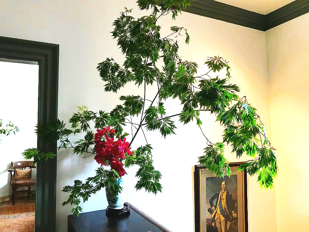 Incredible Full Moon Japanese Maple with Bright Pink Rhododendron in full bloom. A beautiful greeting for the second floor! ©betsygibsondesign