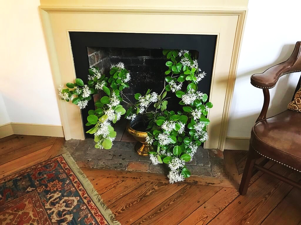 This was a work in progress when I saw it…it's Fringe Tree. What a great filler for a a fireplace when not in use! ©betsygibsondesign