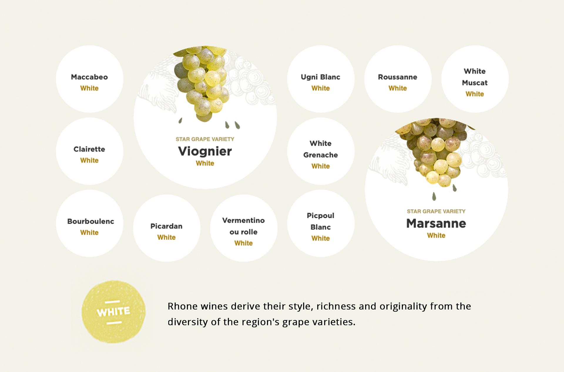 wine-varietals_white.jpg
