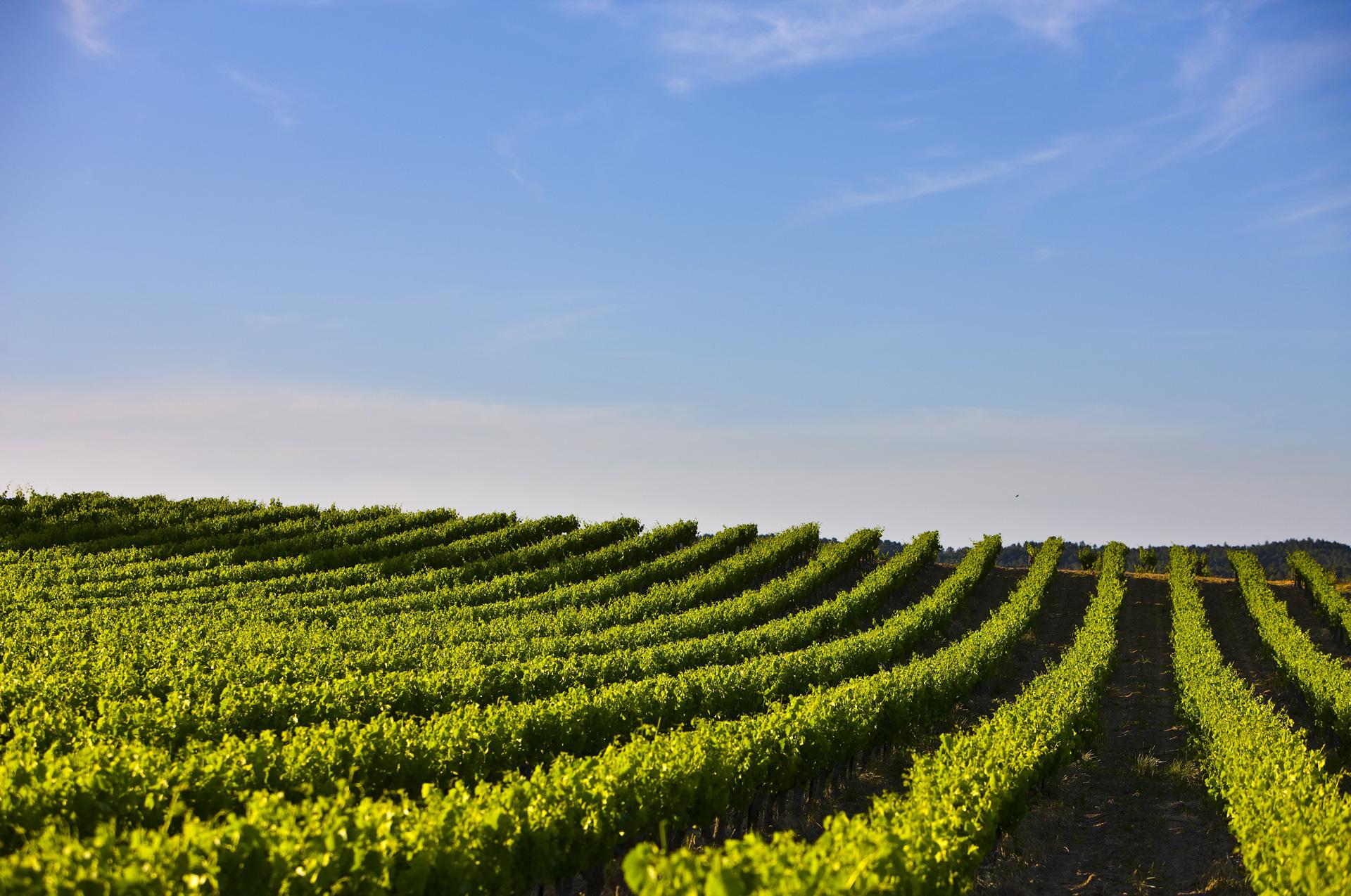 rhone-vineyard-02.jpg