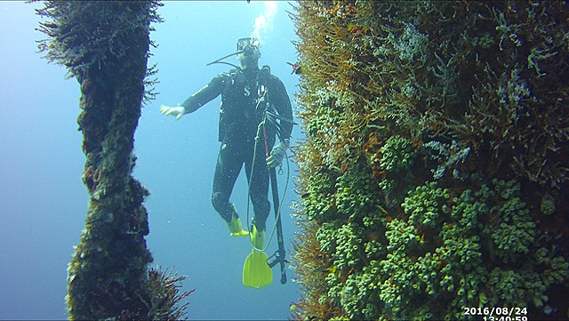 SCUBA - GET CERTIFIEDJOIN DIVE TRIPSVISIT OUR FULLY LOADED DIVE SHOP