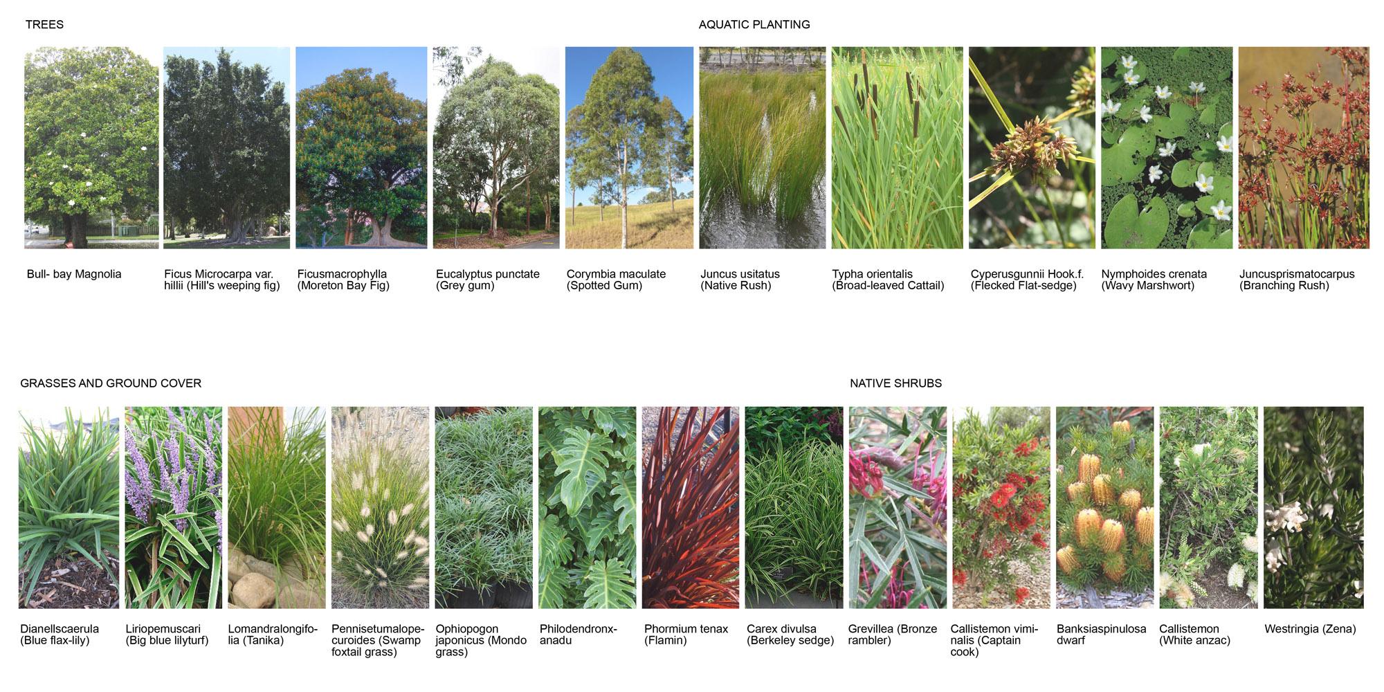 06 - Vegetation - Lockhart Krause Architect.jpg