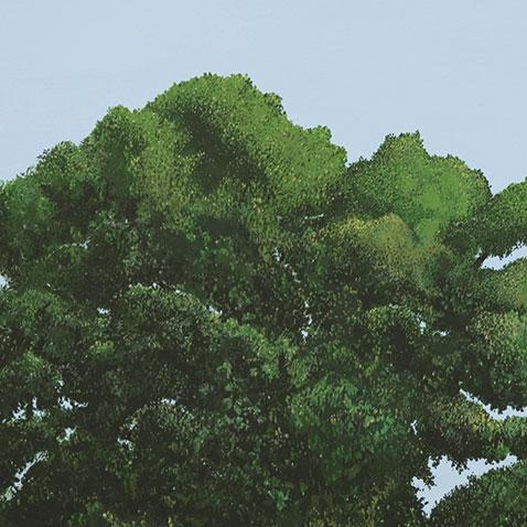 Treepresentations