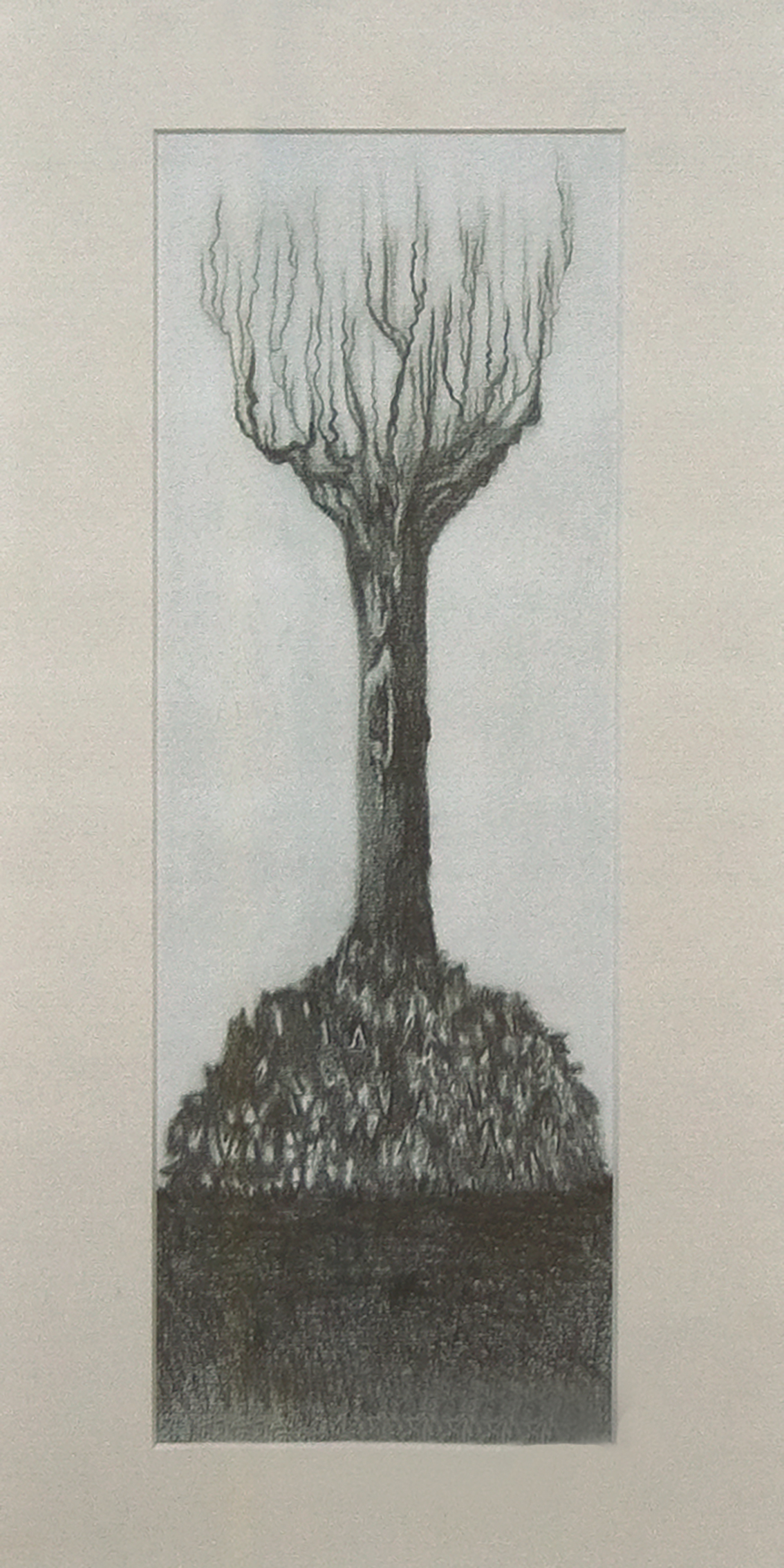 Uprooted 1 - Graphite on paper