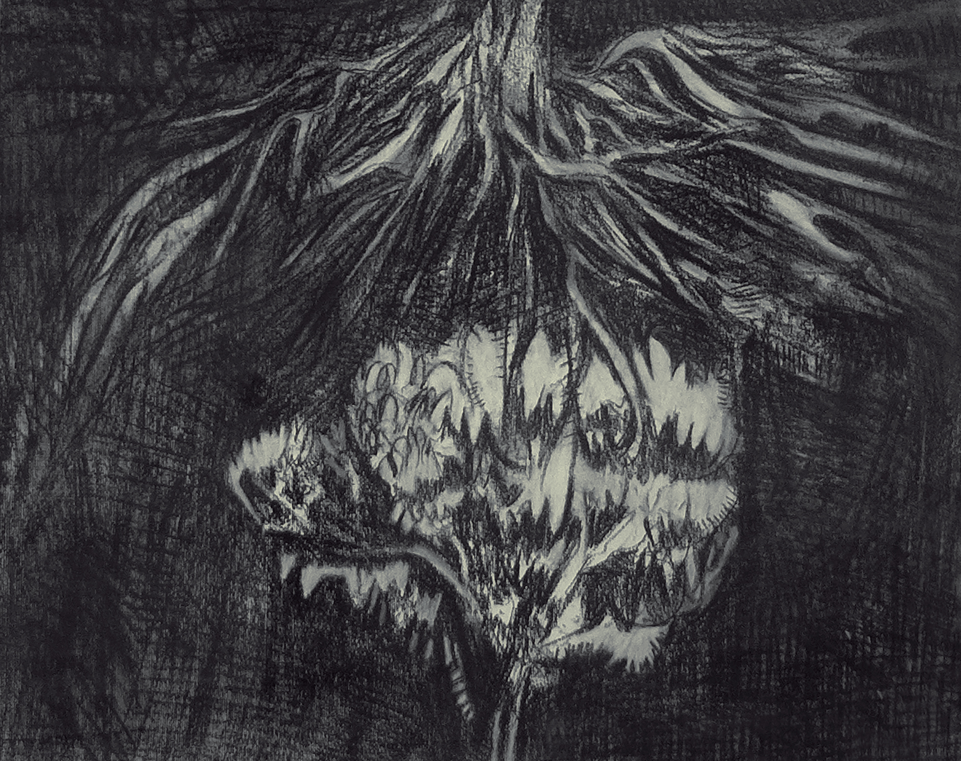 Uprooted 2 - Charcoal and graphite on paper