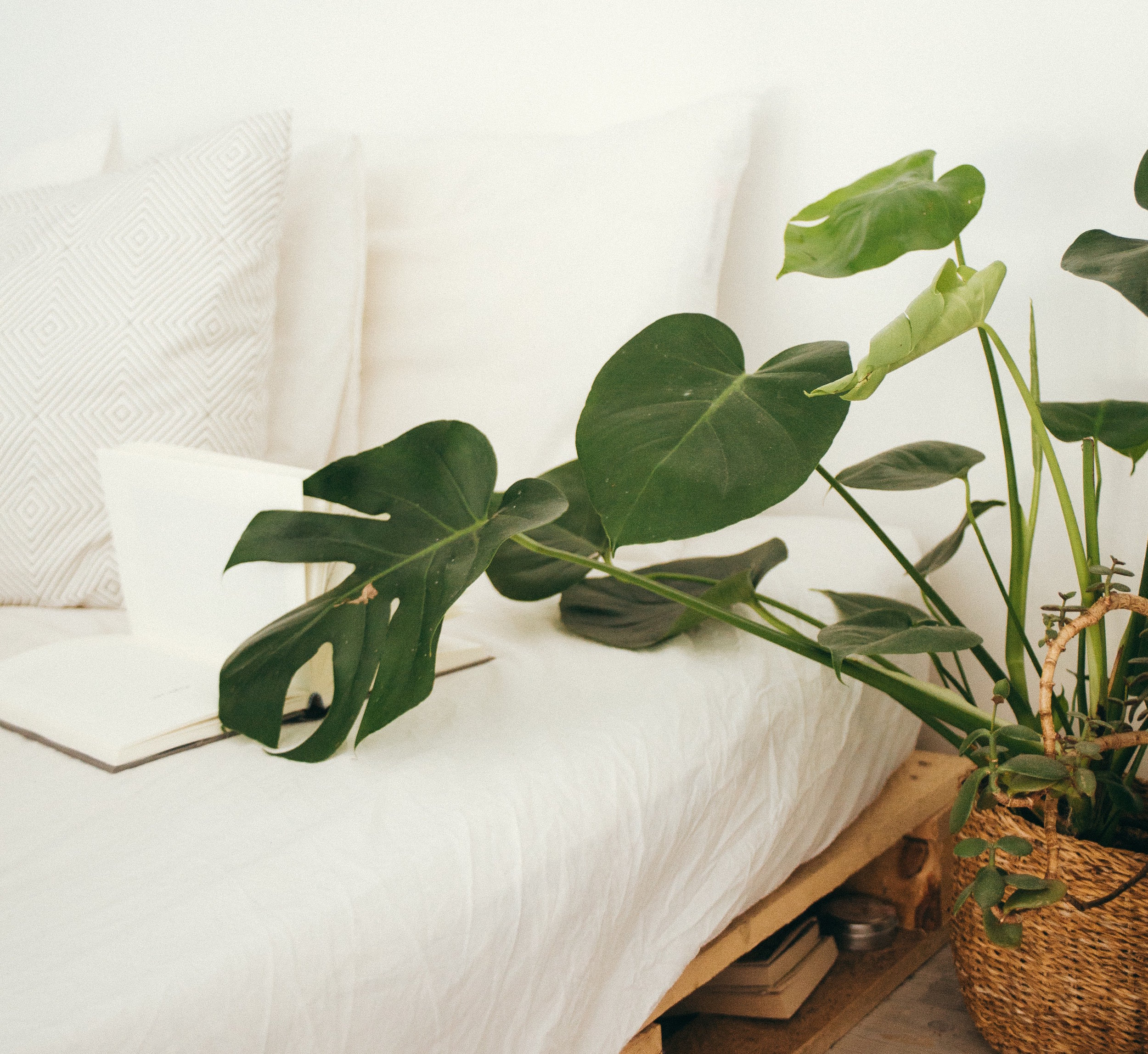 How to care for houseplants.jpg