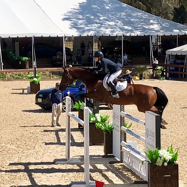 Great two weeks for #haphansenstables at #tvnhs2019 The most special highlight was Trudi Fletcher and Gee Whiz competing in their first Grand Prix together. Such beautiful rounds from everyone! Now on to the Oaks 💙