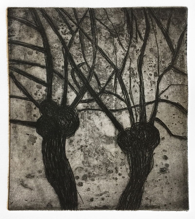 Two Pollards (Nocturnes), 2018