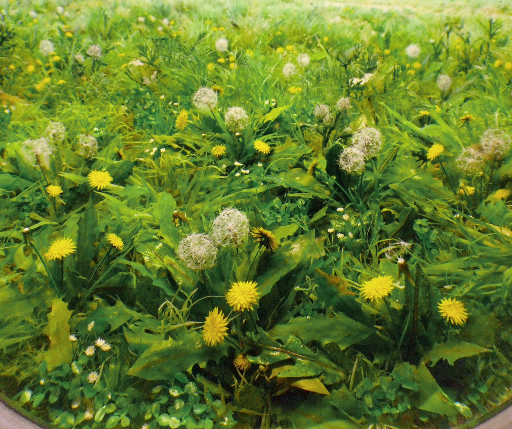 Detail: Field with Dandelions, 2015