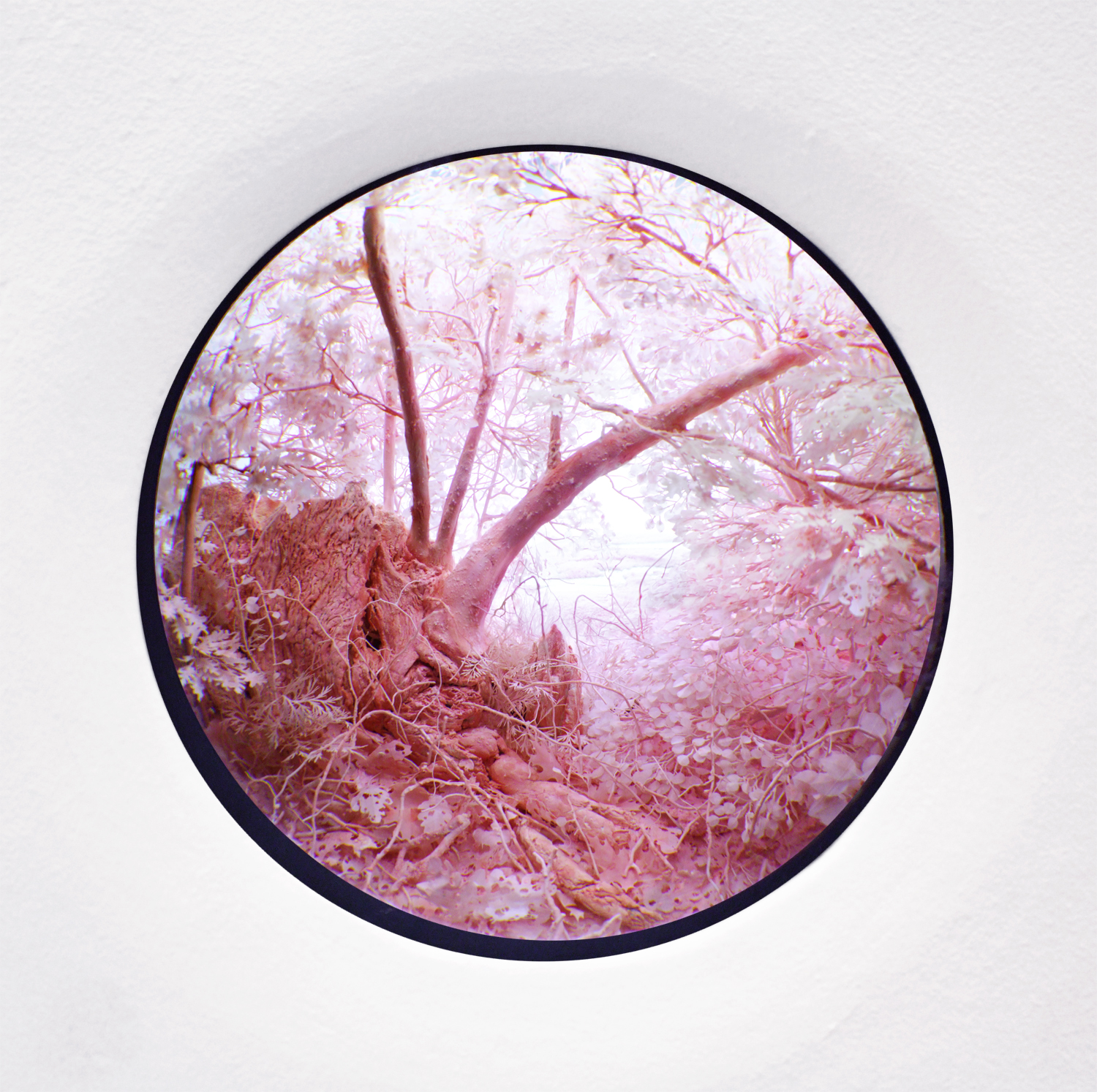 Pink Forest, 2015
