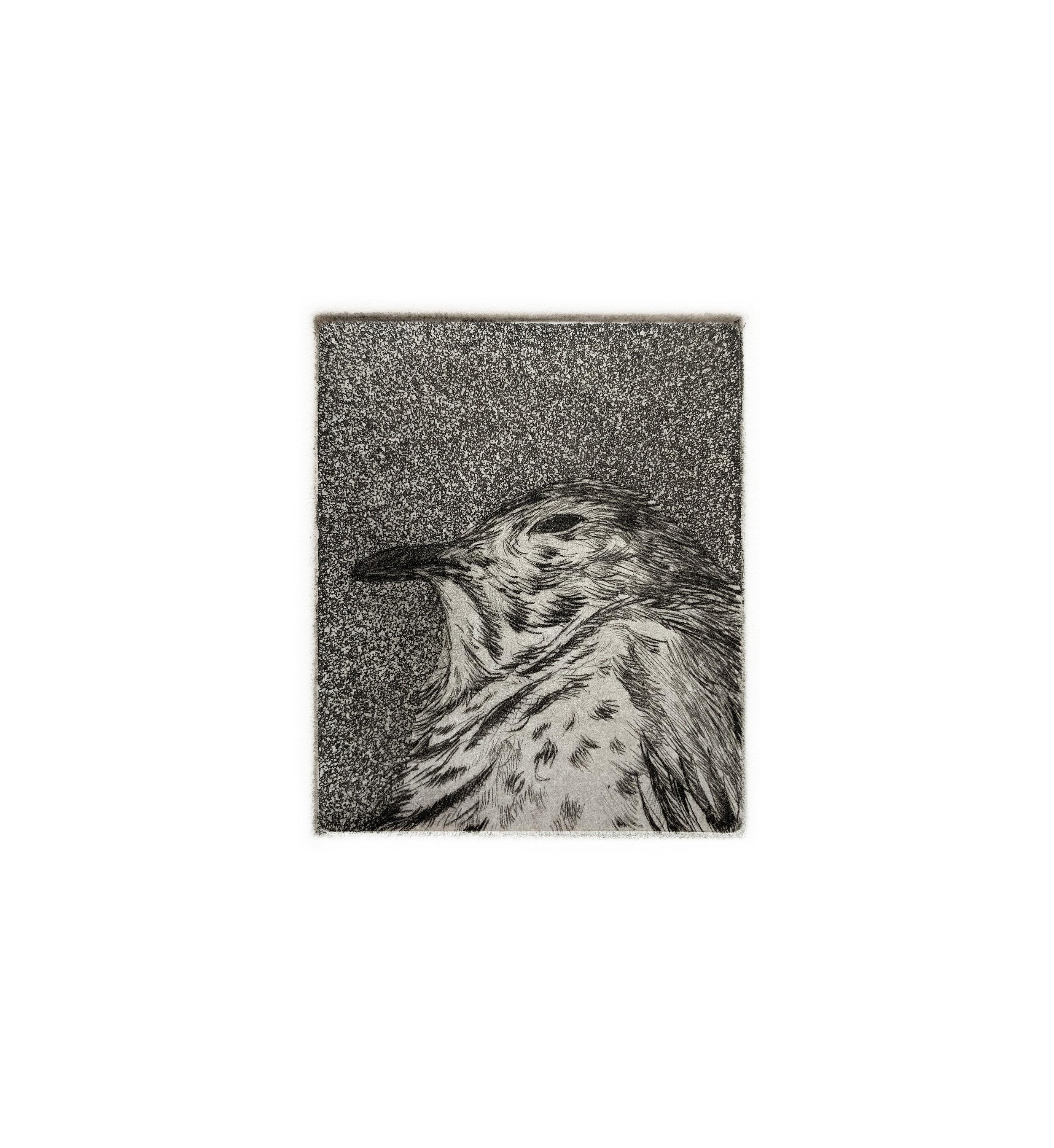 Bird Head #2, 2018