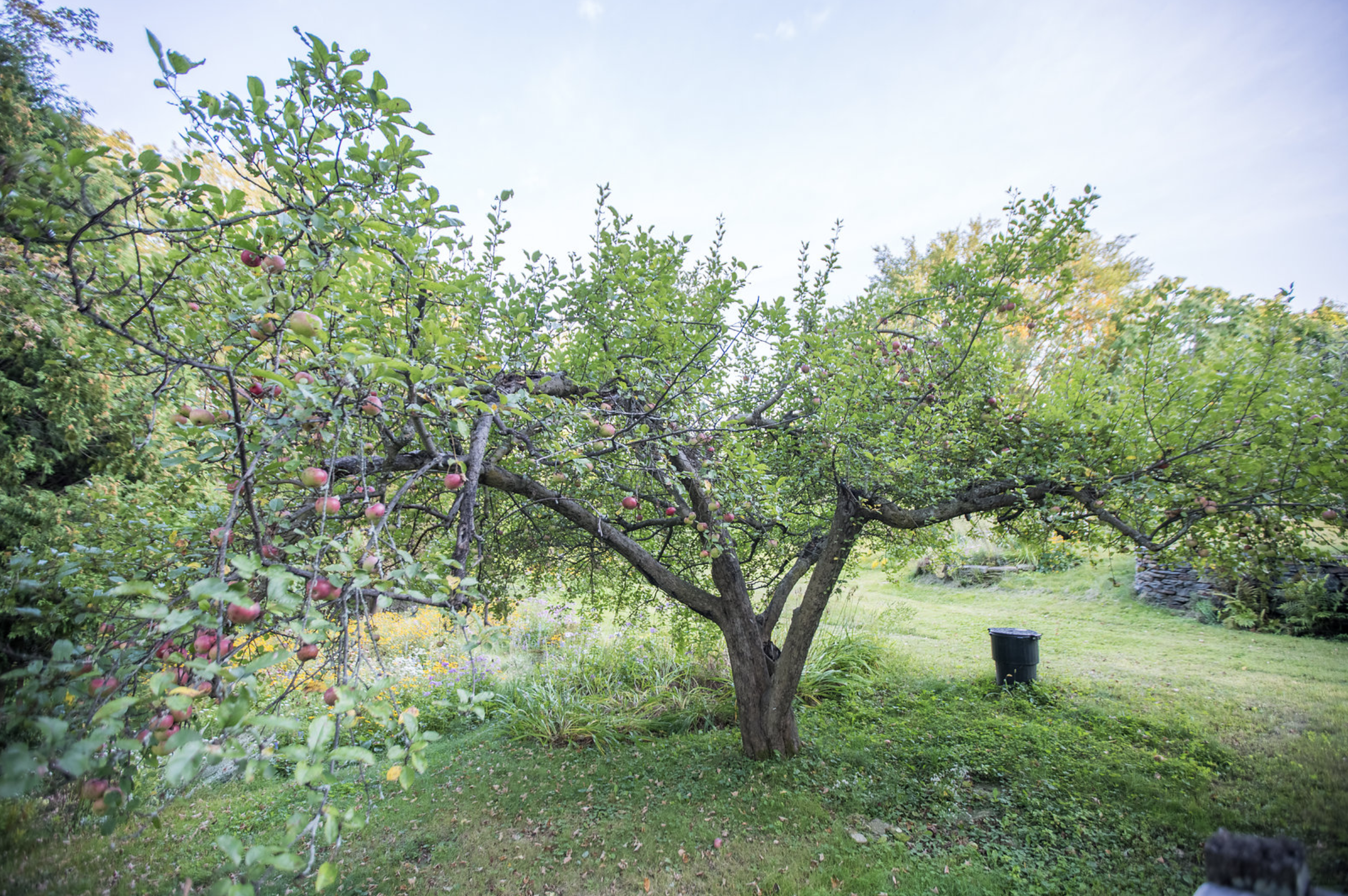 Apple House Orchard