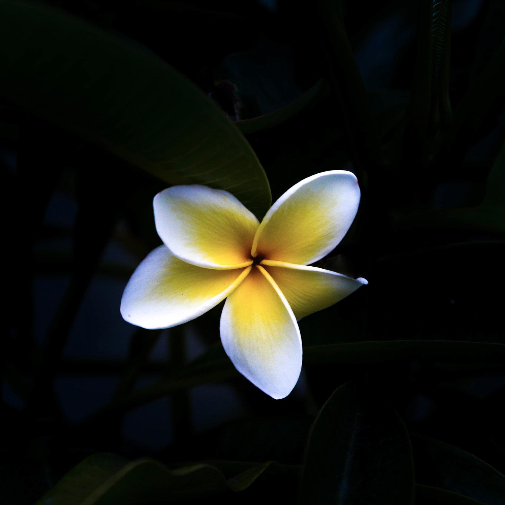 2 Fast-Casual Hawaiian Restaurants for sale! -